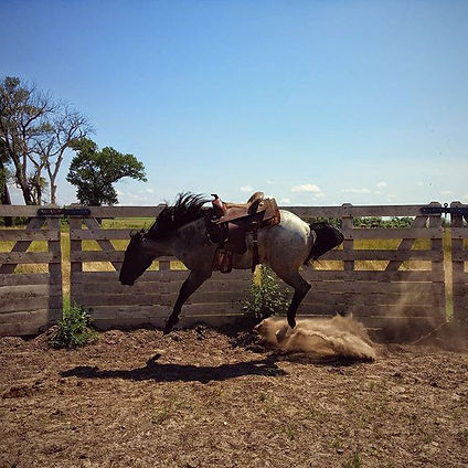 Colt Starting, first saddle, Lexy Nuesch Horse Training, Nebraska, horse