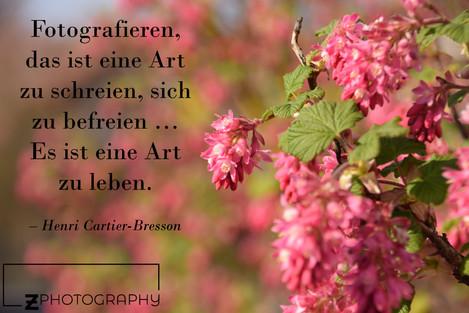 Blumen_mit_Zitat.JPG