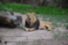 Zoo (4).JPG