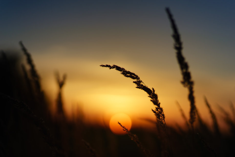 sunset-3679737.jpg