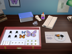 Virtual Insect Collection Lab
