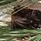 Thumbnail: Pine Tar Soap