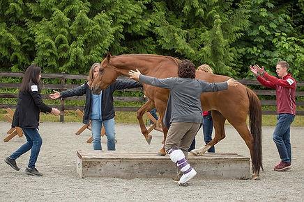 seattle-horse-leadership-training.jpg