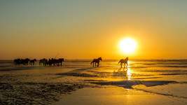 Sunrises_and_sunsets_Horses_Sun_Snow_560