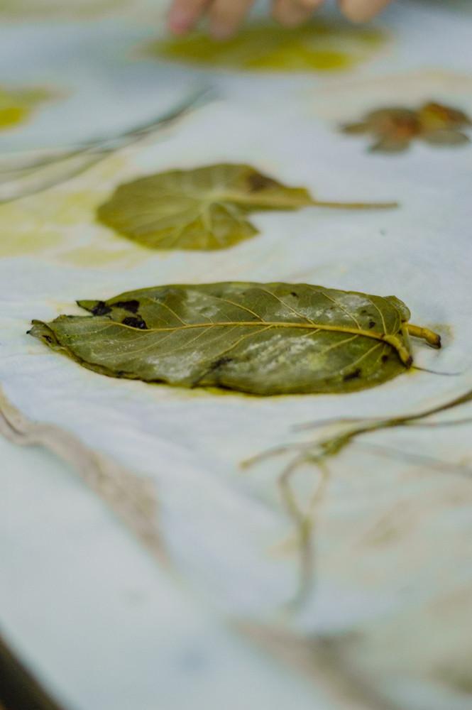 impressao-botanica-0377.jpg