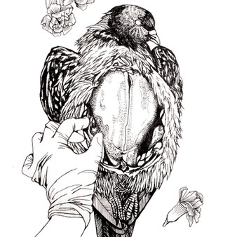Pigeon illustration from upcoming coloring book, by ANTIBOOKCLUB