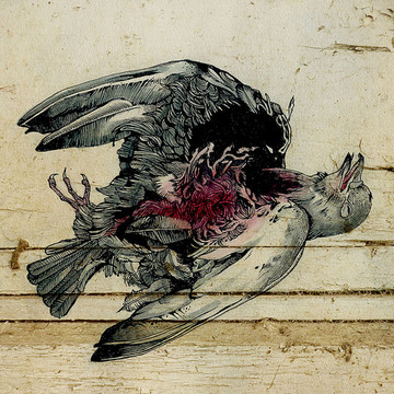 Dead pigeon - watercolor