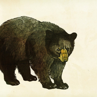 Black bear - watercolor