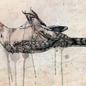Death of a wren - watercolor