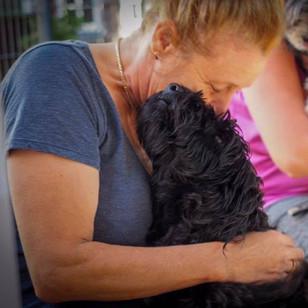 AnimalBehaviourNSW_Accredit_dog_trainer.