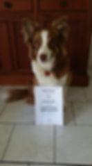 AnimalBehaviourNSW_ assistance dog.jpg