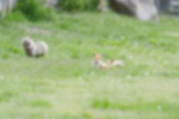 web-kitsune10.jpg