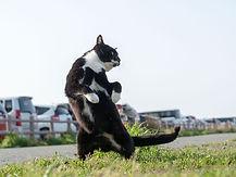ninja-cat12.jpg