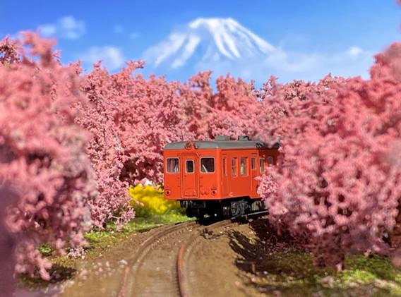 No.60 桜と菜の花