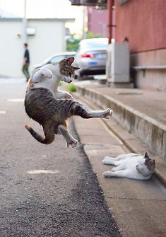 ninja-cat05.jpg