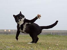 ninja-cat09.jpg