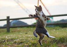 ninja-cat04.jpg