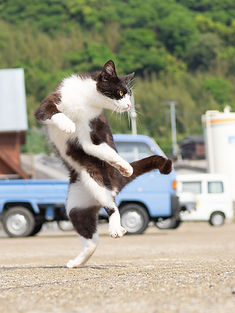 ninja-cat08.jpg