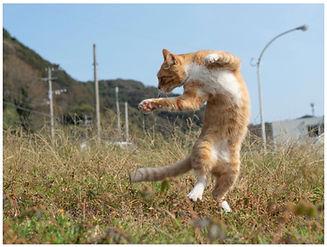 のら猫拳.jpg