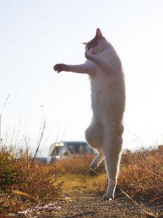 ninja-cat02.jpg
