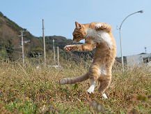 ninja-cat03.jpg