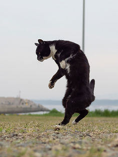 ninja-cat10.jpg