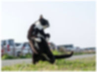 のら猫拳2.jpg