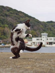 ninja-cat01.jpg