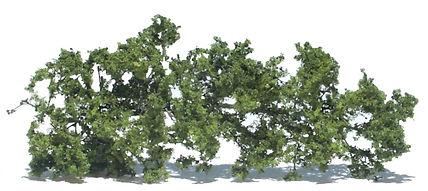 天然素材樹木(葉っぱ付き)2.jpg
