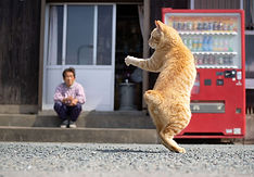 ninja-cat11.jpg
