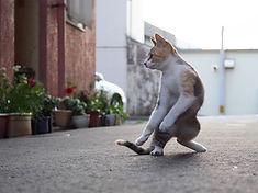 ninja-cat06.jpg