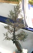 mofumofu-tree08.jpg