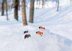 redfox-snow02.jpg