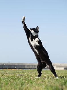 ninja-cat13.jpg