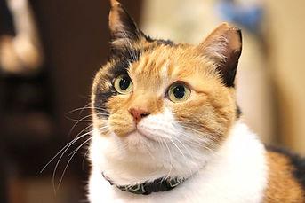 cat-kaede-face.jpg