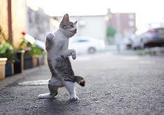 ninja-cat07.jpg