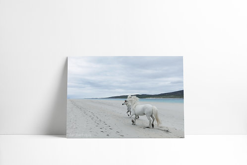Hebridean Horses, Isle of Harris A3 Landscape Prints