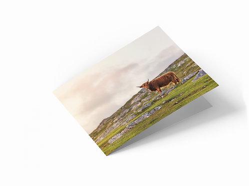 "Hebridean Cow, Isle of Harris 7"" x 5"" Landscape Greetings Card"