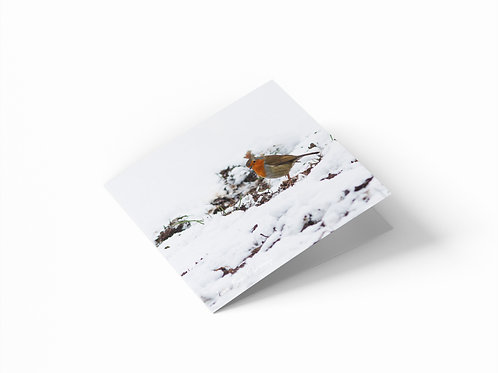 "Winter Robin 6""x 6"" Square Greetings Card"