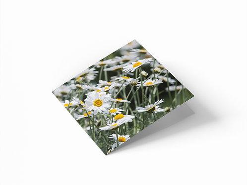 "Cheerful Daisies 6""x 6"" Square Greetings Card"