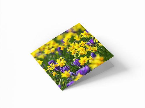 "Daffodils & Croci 6""x 6"" Square Greetings Card"