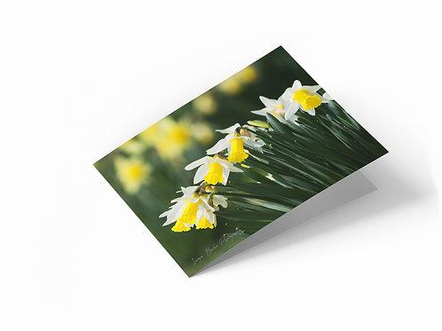 "Spring Daffodils 7"" x 5"" Landscape Greetings Card"