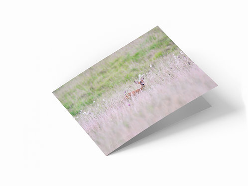 "Meadow Deer, Scotland 7"" x 5"" Landscape Greetings Card"