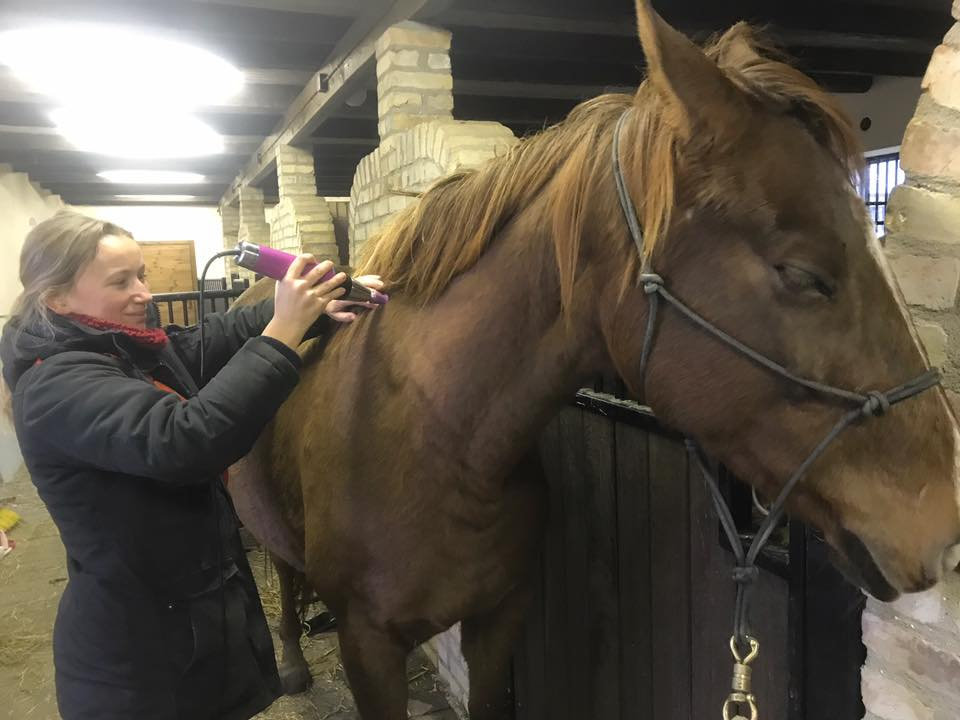 Djupvågsbehandling på Häst
