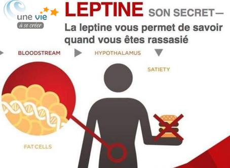 Leptine et obésité : Une solution à la source de vos cellules  !
