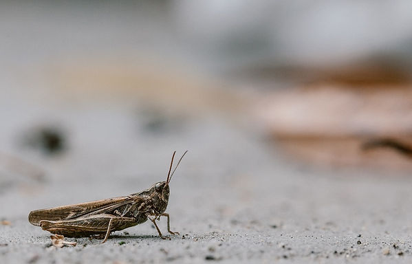 cricket-1287428_960_720.jpg