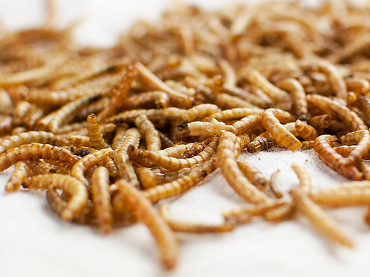 mealworm.png