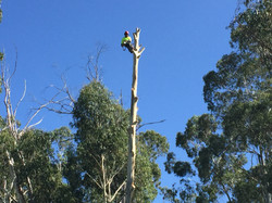 Qualified Arborist