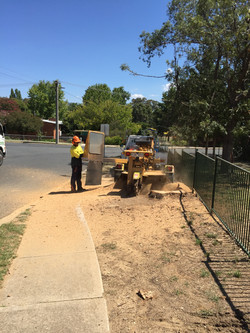 Stump Removal Albury