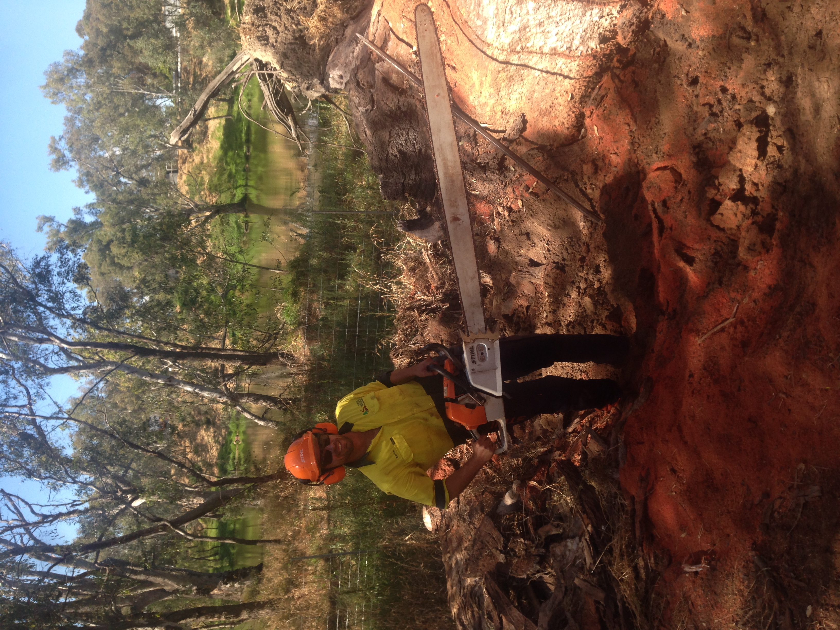 Tree Removal North East Victoria